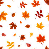 Seamless pattern with various autumn leaves on white. Vector illustration. Vector seamless pattern with various colorful autumn leaves on a white background Stock Photo
