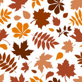 Seamless pattern with various brown autumn leaves on white. Vector illustration. Stock Images