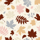 Seamless pattern with various colorful autumn leaves on white. Vector illustration. Royalty Free Stock Images