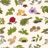 Seamless pattern with various fresh tasty spices or piquant condiments on light background. Plants with leaves, seeds. And flowers. Hand drawn vector Stock Photo