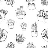 Seamless pattern with various hand drawn succulents and cactus in plant pots. Black and white vector illustration on. White background Stock Image