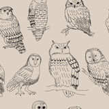 Seamless pattern with various owls in retro style. Seamless pattern with a various owls in retro style Royalty Free Stock Photos