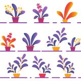 Seamless Pattern of Various Potted Homeplants vector illustration