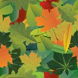 Seamless pattern. Vector of autumn colorful leaves Stock Image