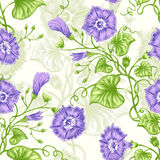 Seamless pattern. Vector seamless background with bindweed. Design for fabrics, textiles, paper, wallpaper, web. Vintage style Stock Photography