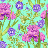 Seamless pattern. Vector seamless background with irises and bindweed. Design for fabrics, textiles, paper, wallpaper, web. Vintage style Royalty Free Stock Photos