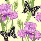 Seamless pattern. Vector seamless background with irises, butterfly. Design for fabrics, textiles, paper, wallpaper, web.  Vintage style Royalty Free Stock Photography