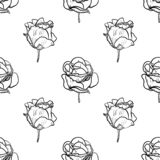 Seamless pattern vector Illustration of beautiful rose, drawing spring flower isolated on white background.  vector illustration