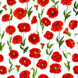 Seamless pattern of vector poppy flowers bunch Royalty Free Stock Photos