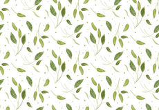 Seamless pattern vector with sage light green leaves garden seas Stock Photography