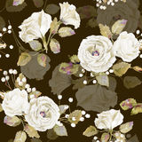 Seamless pattern of vector watercolor white roses on brown bacgr Stock Images