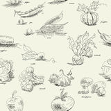 Seamless pattern with vegetable. Universal template for greeting card, web page, background Stock Photography