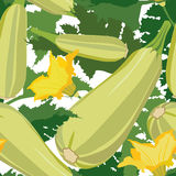 Seamless pattern with vegetable marrow Stock Images