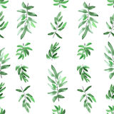 Seamless pattern vertical divergent green leaves on a white background. Watercolor royalty free stock image