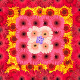 Seamless Pattern from Vibrant Gerbera Flowers Royalty Free Stock Image