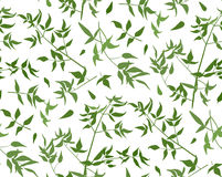 Seamless pattern Vine leaf different branches foliage natural tw Stock Photography