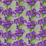 Seamless pattern from vintage crocuses Stock Image