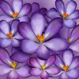 Seamless pattern with violet flowers Royalty Free Stock Photos