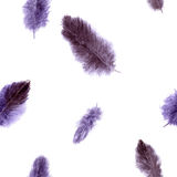 Seamless pattern with violet plumes Royalty Free Stock Photo