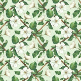 Seamless pattern with watercolor apple flowers Royalty Free Stock Image