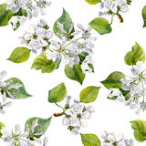 Seamless pattern with watercolor apple tree flowers. Ornament with apple tree blossoms, buds and leaves, hand drawn artistic background royalty free illustration