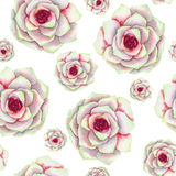 A seamless pattern with the watercolor beautiful red succulents Stock Image