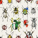 Seamless pattern with watercolor beetles Royalty Free Stock Image