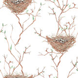 Seamless pattern of the watercolor bird nests on the tree branches, hand drawn on a white background Royalty Free Stock Images