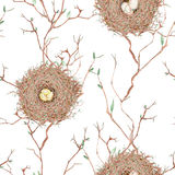 Seamless pattern of the watercolor bird nests on the tree branches, hand drawn on a white background Stock Photography