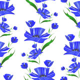 Seamless pattern with watercolor blue cornflower Royalty Free Stock Photos