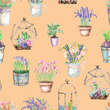 A seamless pattern with watercolor bouquets of wildflowers in a rustic pots and florariums with succulents Stock Photo