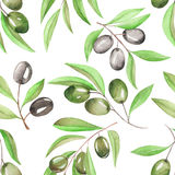 A seamless pattern with the watercolor branches of green and black olives on a white background Royalty Free Stock Image