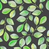 Seamless pattern with the watercolor branches with green leaves, hand painted on a dark background Royalty Free Stock Photo