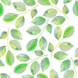 Seamless pattern with the watercolor branches with green leaves, hand painted on a white background stock illustration