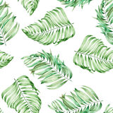 A seamless pattern with the watercolor  branches of the leaves of a palm painted on a white background Royalty Free Stock Photography