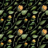 Seamless pattern watercolor buds stalks sunflower leaves on a wight background vector illustration