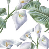 Seamless pattern with watercolor calla. Stock Photos
