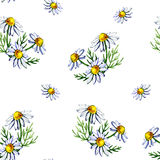 Seamless pattern with watercolor camomile flowers and petals on white background Stock Photography