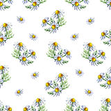 Seamless pattern with watercolor camomile flowers and petals on white background Royalty Free Stock Photo