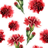 Seamless pattern with watercolor carnation flowers. Floral background, wallpaper. Elegance pattern with realistic red flowers. Vintage illustrationr Royalty Free Stock Image