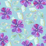 Seamless pattern with watercolor clematis Stock Images