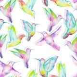 Seamless pattern of watercolor colibri Stock Photo
