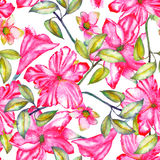 Seamless pattern with the watercolor crimson and scarlet exotic flowers, hibiscus Royalty Free Stock Image