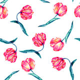 A seamless pattern with the watercolor crimson and scarlet tulips Royalty Free Stock Images