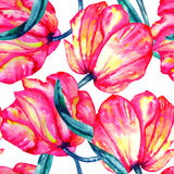 Seamless pattern with the watercolor crimson and scarlet tulips Royalty Free Stock Image