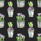 Seamless pattern of the watercolor crocus flowers in a rusty buckets Royalty Free Stock Photos