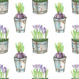 Seamless pattern of the watercolor crocus flowers in a rusty buckets. Seamless pattern of the crocus flowers in a rusty buckets, hand drawn in watercolor on a Royalty Free Stock Image