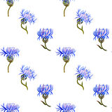 Seamless pattern with watercolor drawing cornflowers Royalty Free Stock Photography