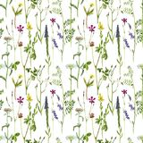Seamless pattern with watercolor flowers. Seamless pattern with watercolor drawing field flowers, hand drawn illustration, painted botanical illustration in Stock Photography