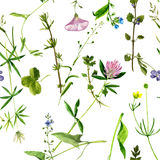 Seamless pattern with watercolor drawing flowers and herbs. Background with watercolor drawing wild flowers, seamless pattern with painted field plants, herbal Stock Images